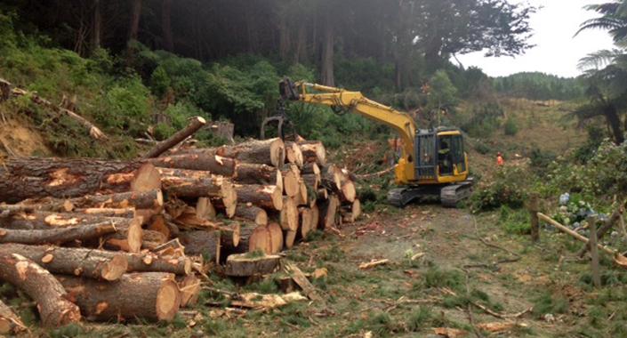 Wilding wood management